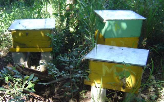 Bee hives for honey production and pollination of fruit trees.