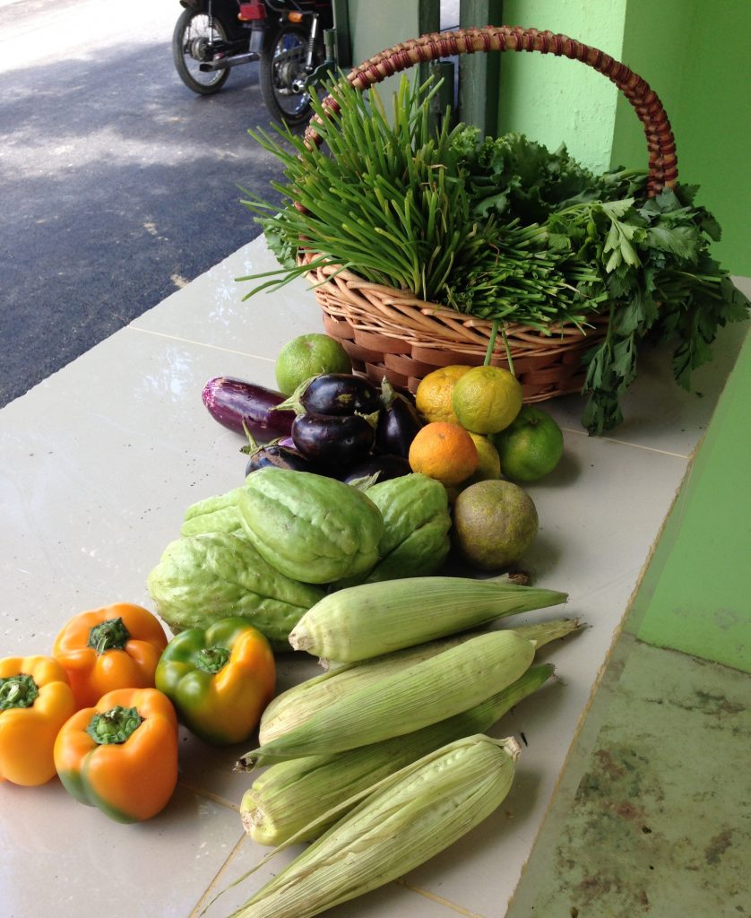 A healthy selection of organically grown produce at the Federation's Commercial Distribution Center.